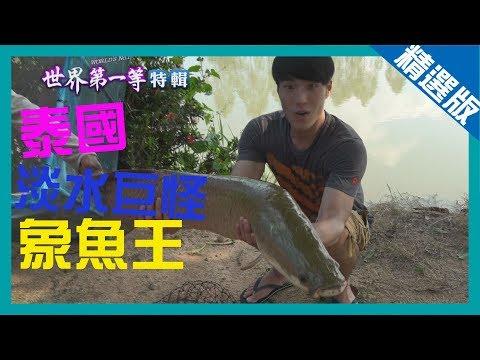 《世界第一等》739集【泰國】 淡水巨怪象魚王│精選版