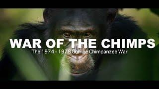 World War Chimp   The Brutal 1974 - 1978 Gombe Chimpanzee War: Documentary