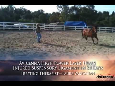Horse Healed in 30 Days by Avicenna Laser