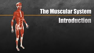 The Muscular System Explained In 6 Minutes