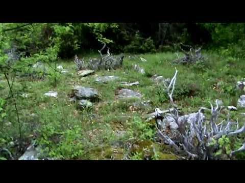 Дунското гробе - средновековен некропол край Черничево