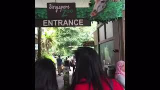 Exploring Singapore Zoo|Part 1 (SG VLOG 2018)|Day 4