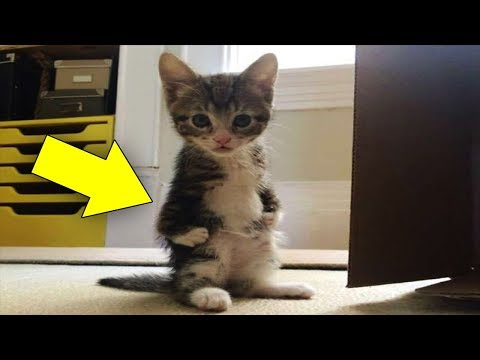 Kanga Roo' Kitten Was Born With A Huge Disability, But She Is Melting Everybody's Heart ❤️?