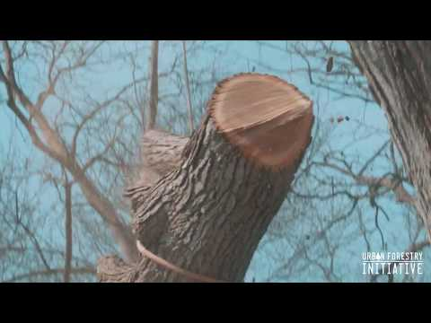 Urban Forestry Initiative