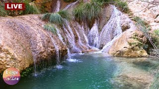 Relaxing waterfall-Soothing water sounds-Forest birds singing-Nature sounds-Sleep Meditation - Live
