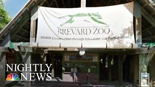 Two-Year-Old Girl Hospitalized After Falling Into Rhino Exhibit At Florida Zoo   NBC Nightly News