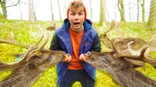 IN SEARCH OF WILD ANIMALS IN IRELAND ☆ ADVENTURE ☆