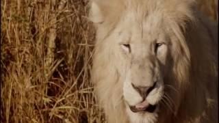 BBC One Documentary: Ingenious Animals