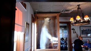 #806 BUFFALO BILL WILD WEST Themed Restaurant - Jordan The Lion Daily Travel Vlog (10/21/18)
