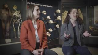 Michigan Minds: Public Engagement Built into the DNA of the New U-M Museum of Natural History