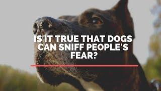 Is It True That Dogs Feel The Fear Of People?