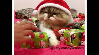 SANTA CAT not giving gifts! FUNNY CAT VIDEO