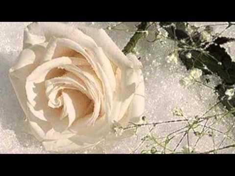 Белые цветы ( Александр Шапиро)