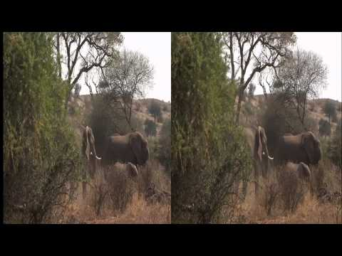 3net African Wild Mashatu Clip 3 3D Video