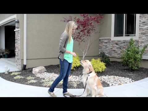 How to Teach a Dog to Stay When You Walk Away