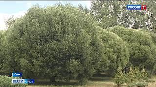Дендрологический сад имени Гензе должен выплатить омской предпринимательнице около 600 тысяч рублей