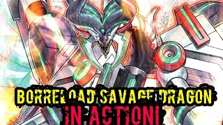 New Borreload Savage Dragon in Action! Pure Rokket Deck With Spice