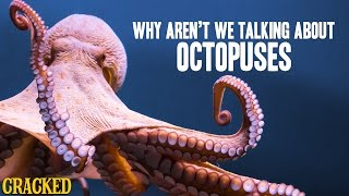Why Aren't We Talking About Octopuses