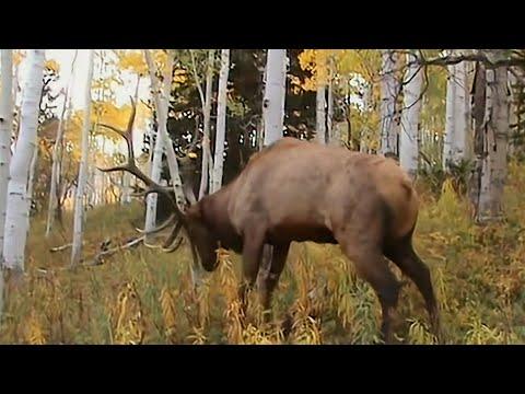 Mužjak jelena na niti 5 metara