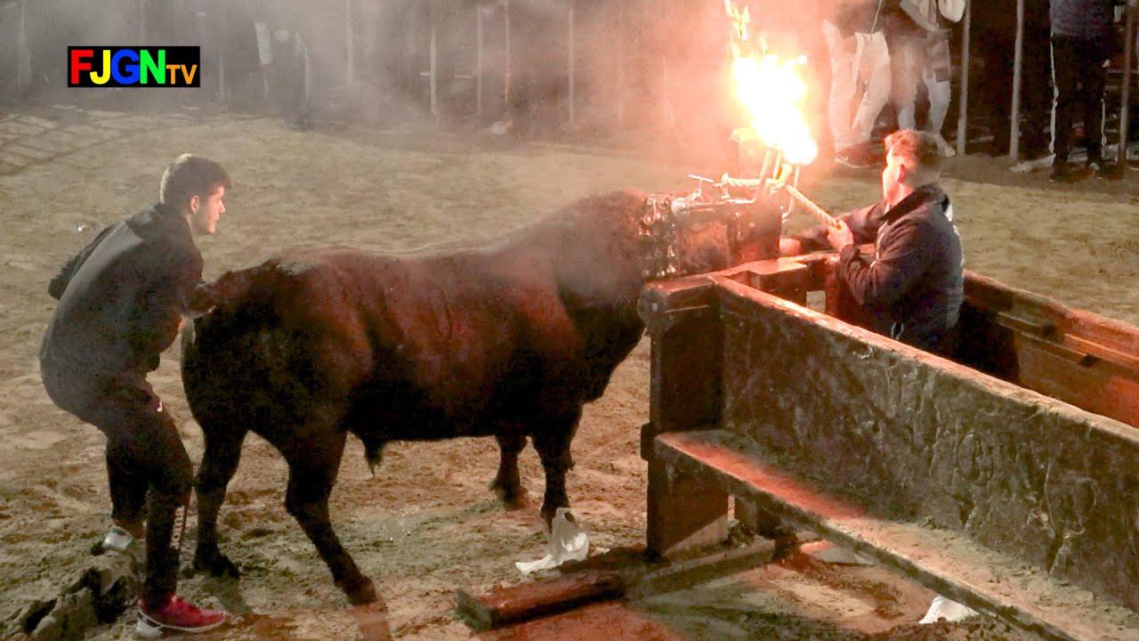 Emboladores del serrallo Toro Iván Miro Bous la Ribera - Benicassim 25-01-2020 (Castellon) Bous Al Carrer