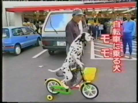 Куче вози точак?