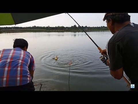 Đi câu cá chép - cá ăn như này thì làm sao mà về được   Recreational Fishing