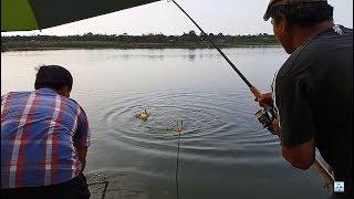 Đi câu cá chép - cá ăn như này thì làm sao mà về được | Recreational Fishing