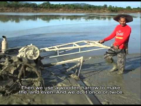 Farmers tell their stories: Direct seeding of rice using a drumseeder in Indonesia