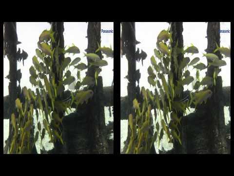 3D Demonstration Damm Seahorse 3D
