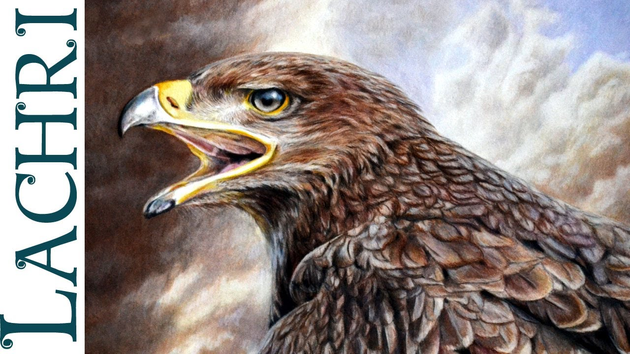 Drawing an Eagle w Faber Castell Polychromos colored