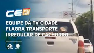 Equipe da TV Cidade flagra transporte irregular de cachorro