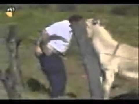 El burro quiere cojer al tipo.