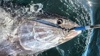 Amazing Giant Bluefin Tuna Fishing Skill, Catching Tuna on The Big Sea