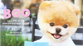Story Time: Boo: The Life of the World's Cutest Dog