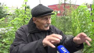 Омский садовод разбил на своем садовом участке виноградную плантацию