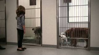 Luscious International's Short Film for Sydney Dogs & Cats Home