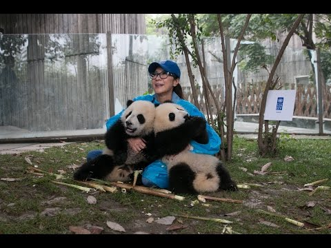 Michelle Yeoh and UNDP's Panda Ambassadors for the Global Goals