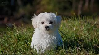 1 hour Sleep and relax Music For Dogs, Cats & All Pets, Stress Relief, Anxiety Healing Music 0042