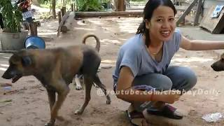 Amazing funny girl and group dog - Kindly girl give the special food to funny poppies EP2 Part 1