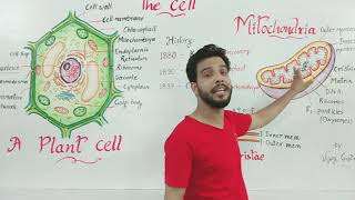Mitochondria in hindi ( माइटोकॉनड्रिया) .Cell structure part-2
