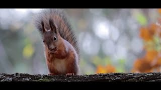 FORGET CAT VIDEOS! Watch SQUIRRELS – Cute Wild Animals in a Forest