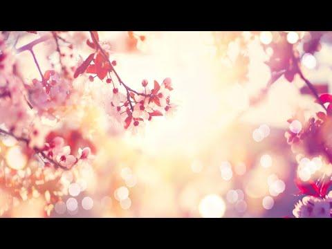 Relaxing Sleep Music: Soft Piano Music, Sleeping Music, Soothing Meditation Music, Yoga Music ★98