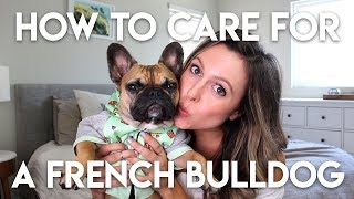 HOW TO TAKE CARE OF A FRENCHIE