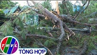 THVL | Sét đánh gãy ngang cây thông cổ thụ ở Đà Lạt, 4 người thoát nạn