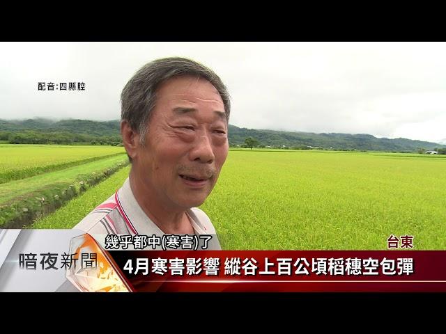 4月寒害影響 台東縱谷三鄉鎮稻穗空包彈