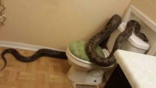 100% các bạn cần bỏ ngay thói quen này trong nhà tắm