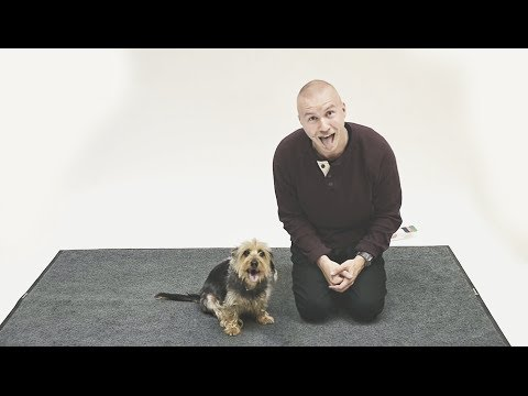 Ow Dogs React To Human Barking