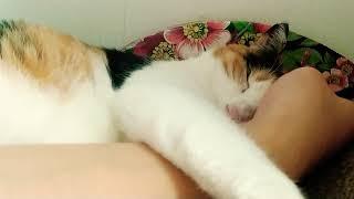 팔을 감싸고 자는 두이(sleeping cat)