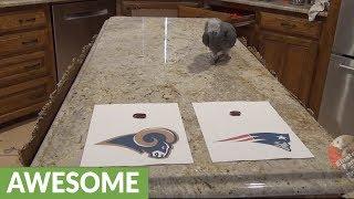 Psychic parrot predicts Super Bowl winner