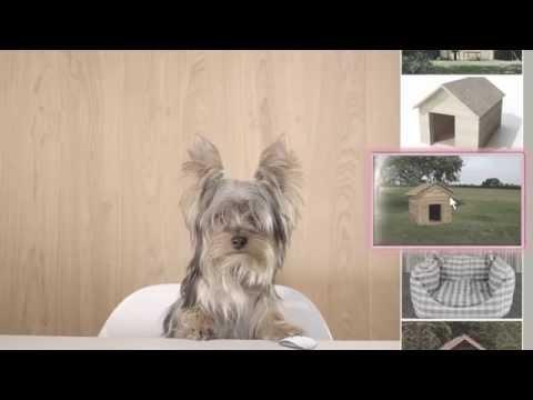 Nepremičnine na bolha.com sedaj tudi na mobilni aplikaciji! :: kuža